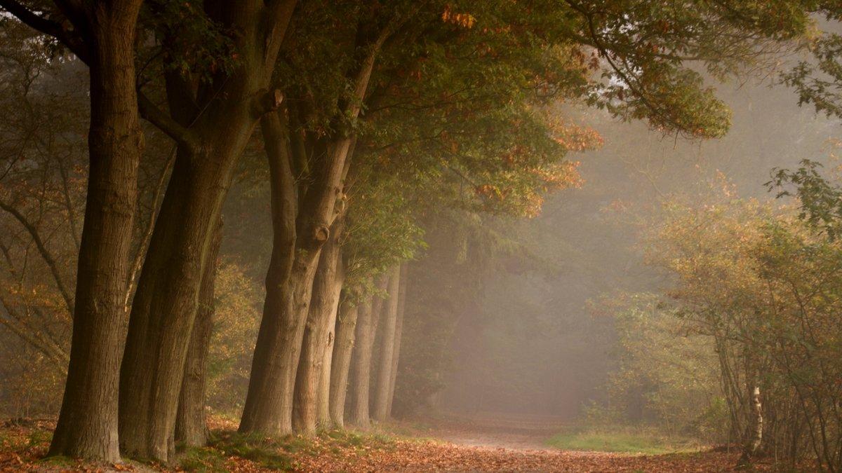 Завораживающий осенний лес в тумане.
