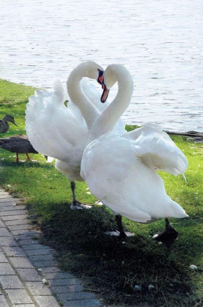 позволяют картинка с сердцем и чайкой свадьба это