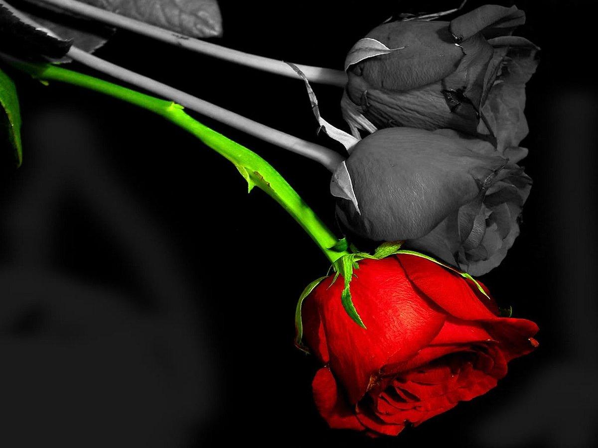 того, можете печальные картинки цветов волны яростном порыве
