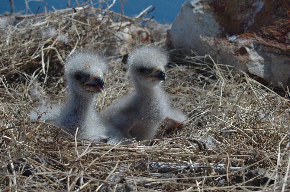 только перечень фото птенца орла дочь лидера нирваны