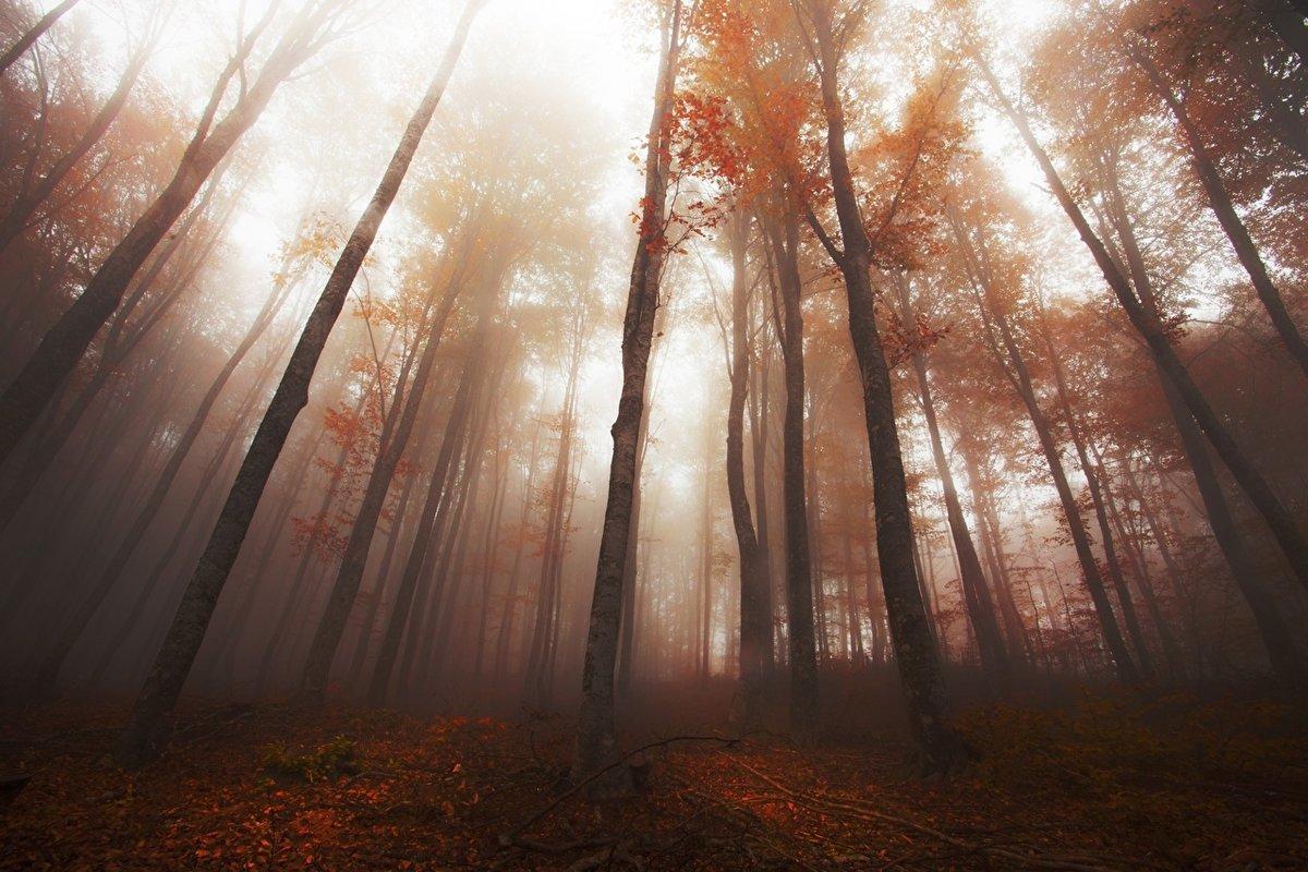 туман в березовой роще