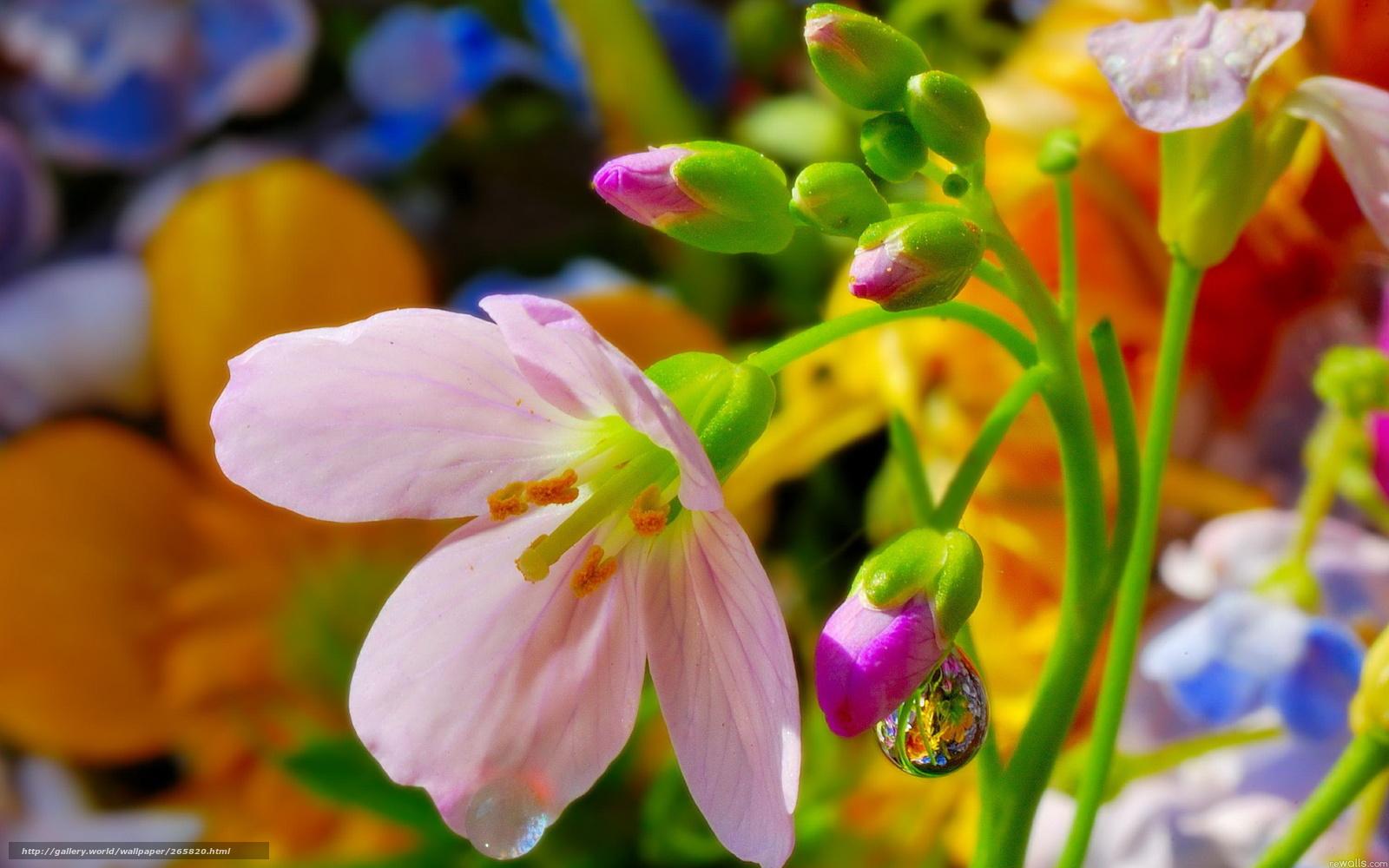 Фото летние цветы в природе 74