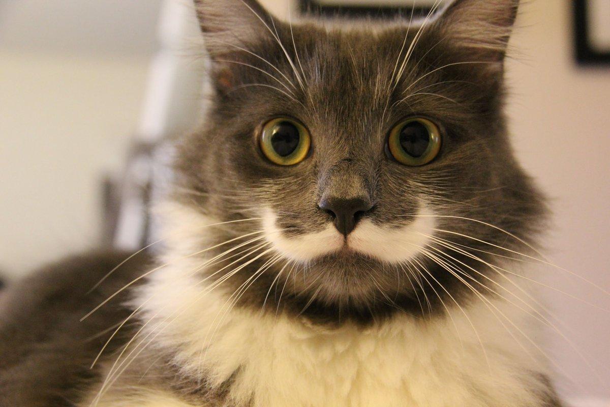 Открытки, кошки картинки самые мире смешные