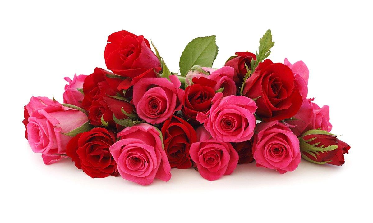 Розы картинки с пожеланиями, открыток для