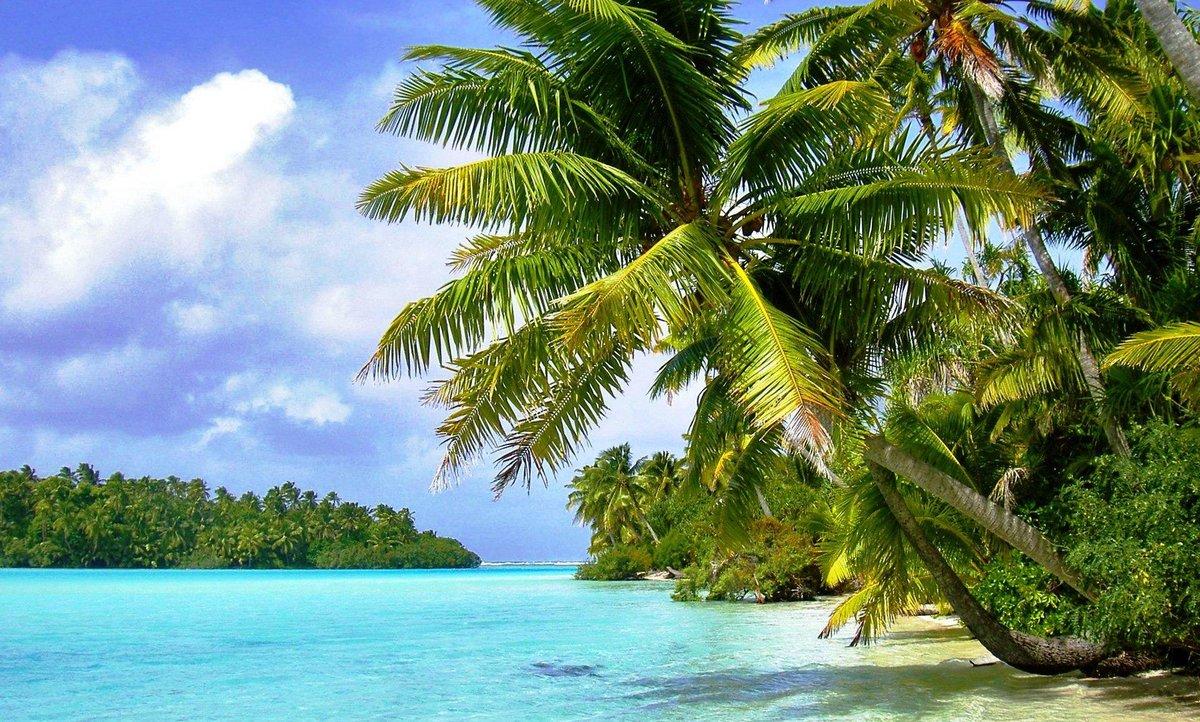 сделать пальмы природа картинки столице