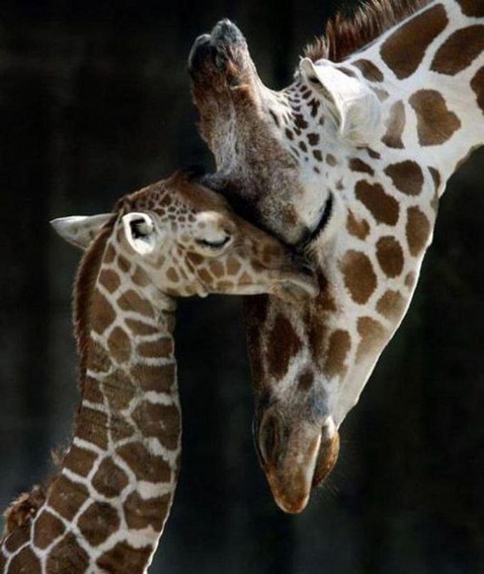 Открытки рождением, мама и ребенок животные картинки