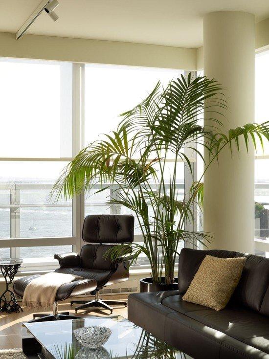 Комнатные растения в интерьере гостиной - это всегда модно и красиво