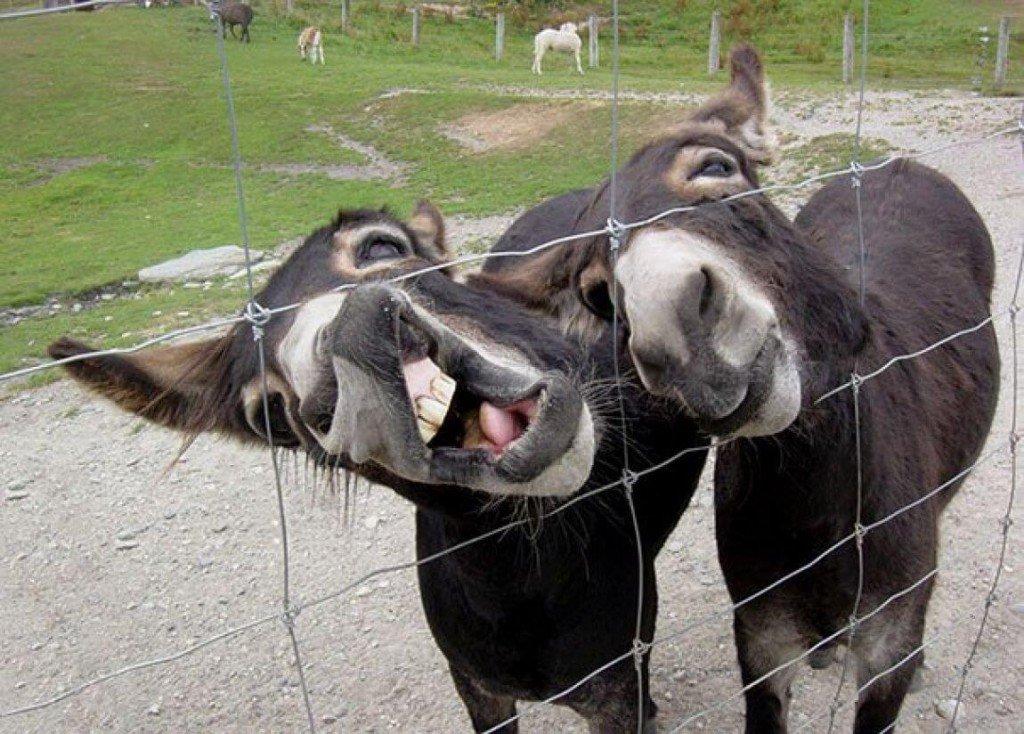 Смешные животные фото до слез