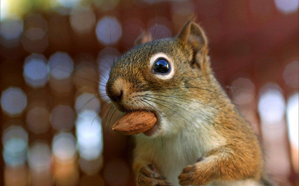 День, картинки ем орехи прикол