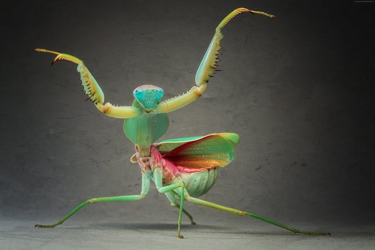 Приколы картинки с насекомыми, своими руками