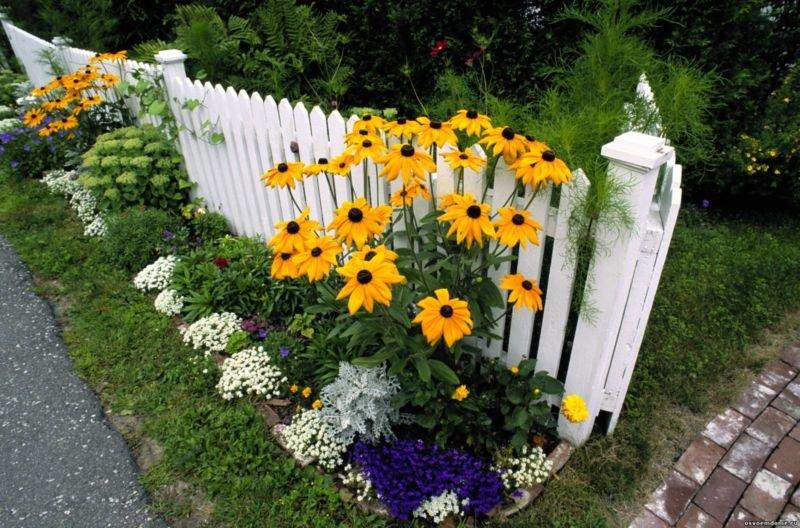 Жёлтые цветы отличная идея для вашего ландшавта.