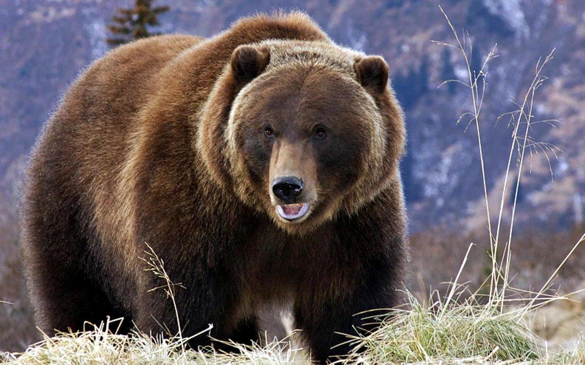 Днем святого, картинка с медведями