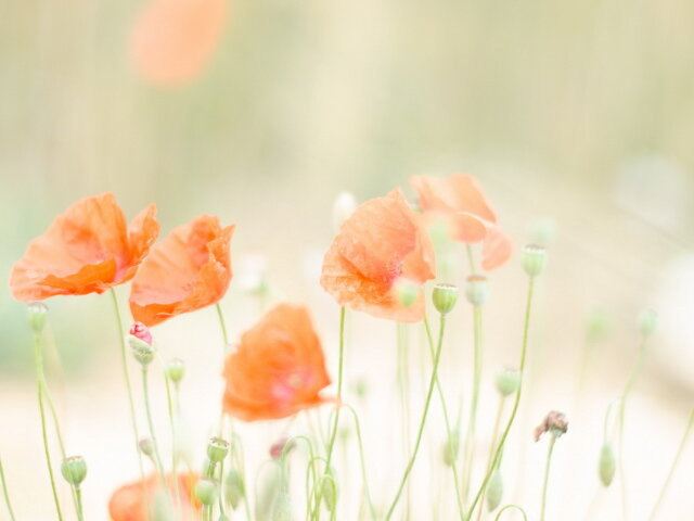 цветы , лето