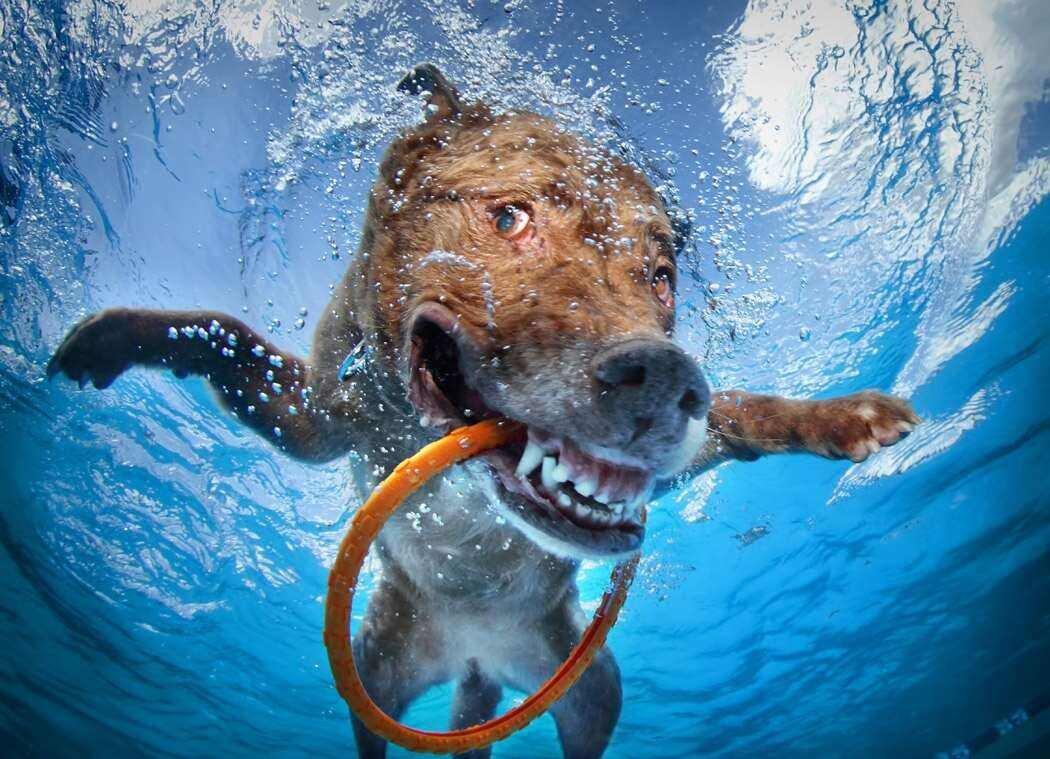 Смешные картинки про воду