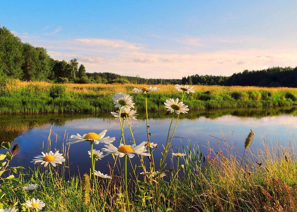 Картинки ромашки поле река