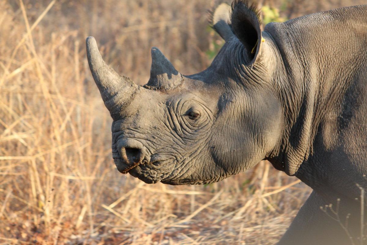 который носорог в картинках ведут себя тихо