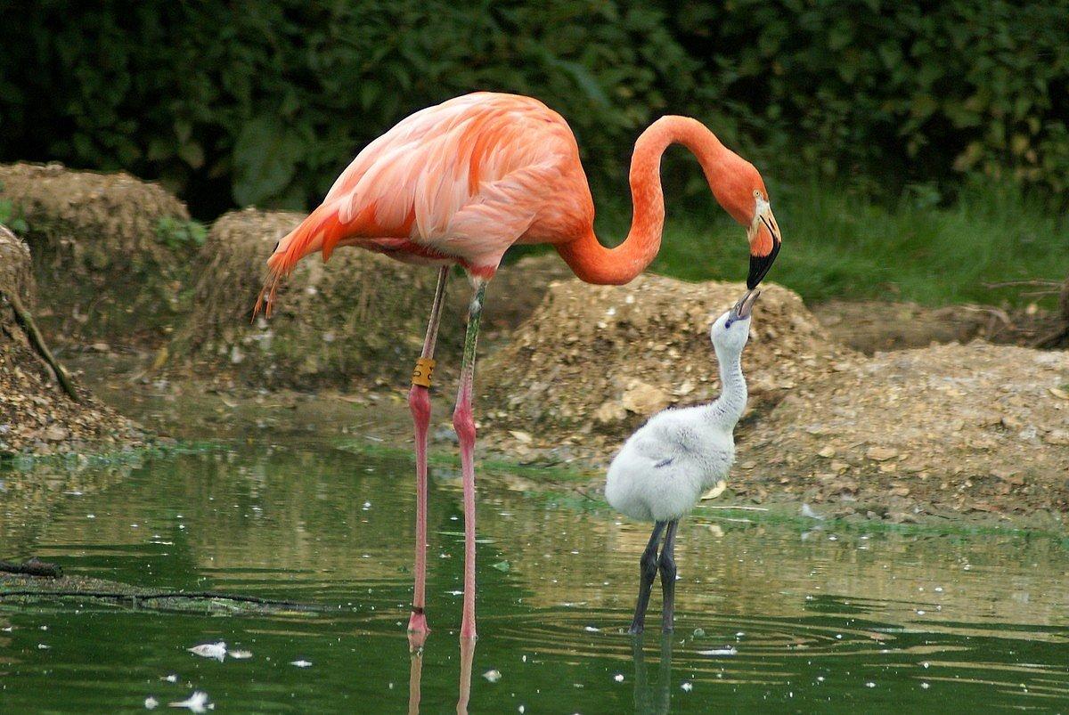 Екатеринбург акварель, картинки и фото розового фламинго