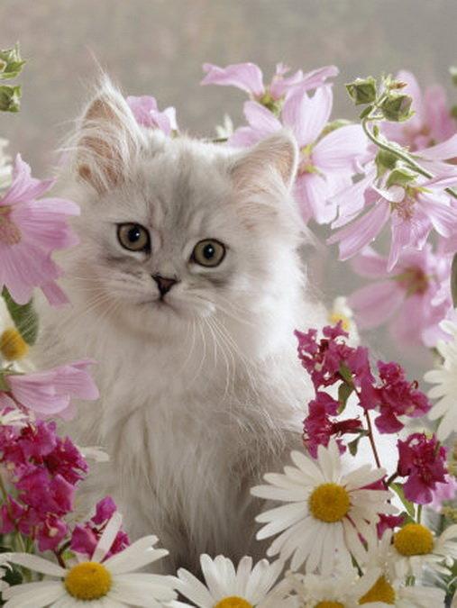 Фетра, открытки или фото с кошками