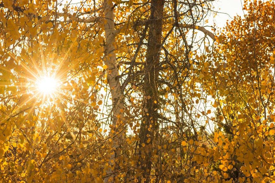 Днем, открытки осень солнце