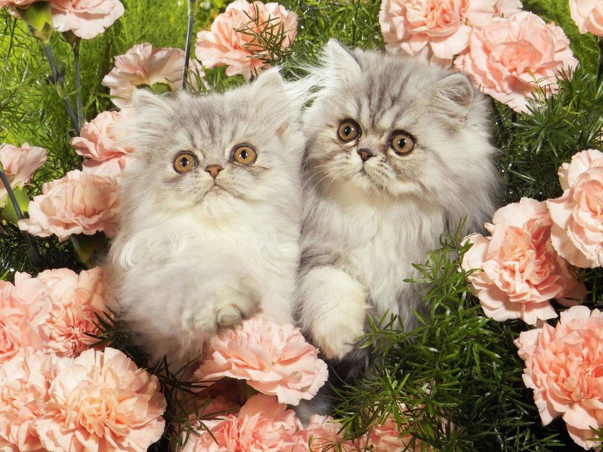 Анимация для, котята фото открытки