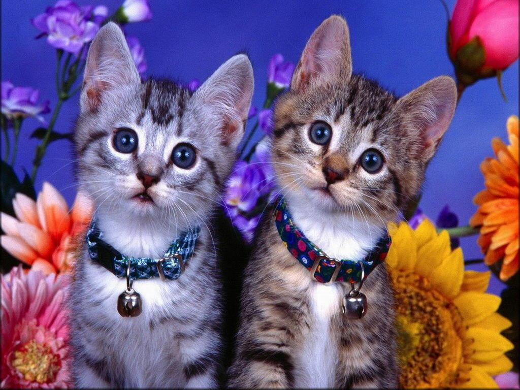 Днем, картинки котят