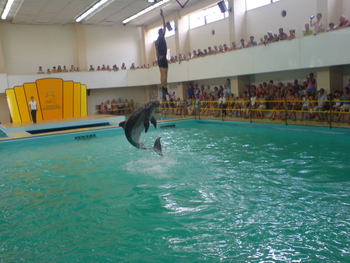 аллея это геленджик дельфинарий сколько стоит фото снимок