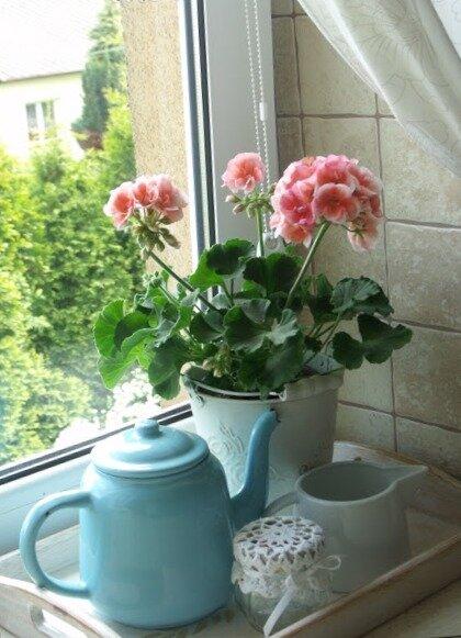 Озеленяем кухню. Что можно поставить? Какая польза от зелени? Как с помощью цветов можно преобразить/украсить/разнообразить кухню. Полезные травы/специи -
