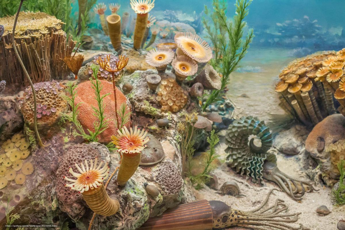 underwater painting plants - HD1600×1067