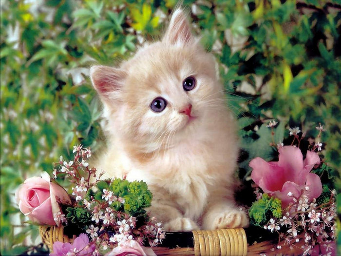 Подними себе, открытки с котятами с цветами