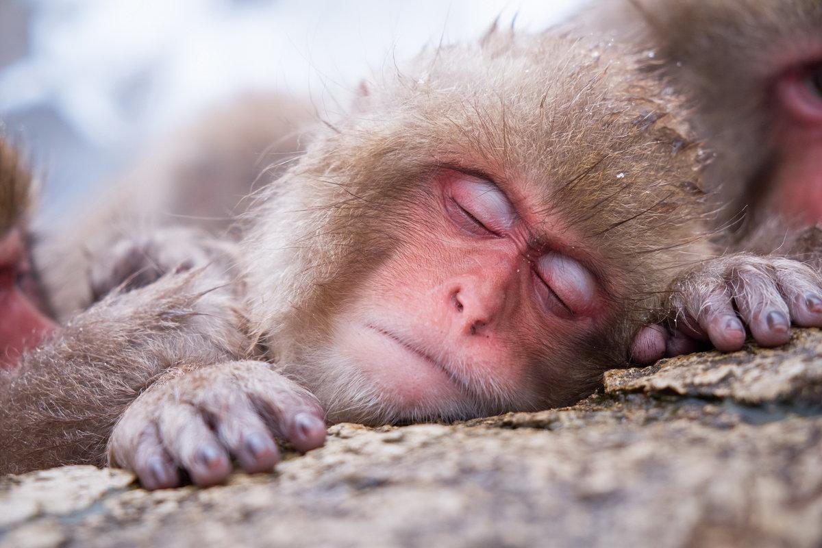 Прикольные картинки про спящих