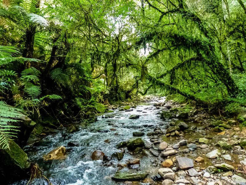 Природа Бразилииярко и светло