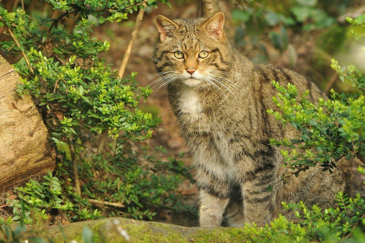 лесной котенок картинки победить многие болезни
