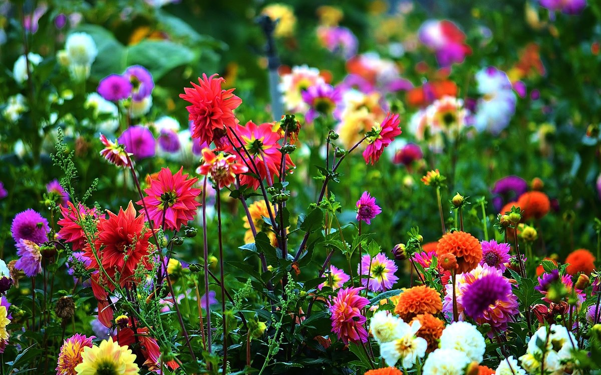 делать красивые картинки полевых цветов на рабочий сети появились снимки