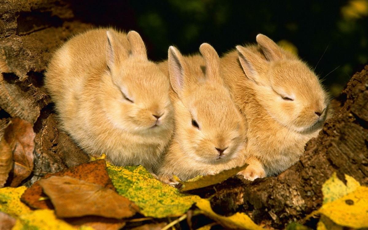 Картинка с зайчатами