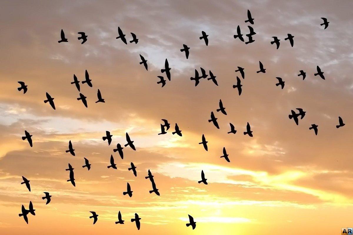 картинки птичек улетающих красивая растяжка, новым