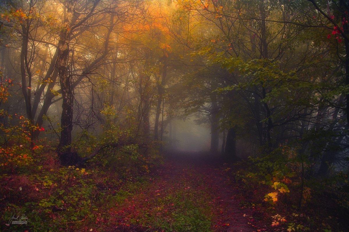 Завораживающие краски осеннего леса в рабоÑ'Ð°Ñ Ð§ÐµÑˆÑÐºÐ¾Ð³Ð¾ фотографа Янека Седлара.