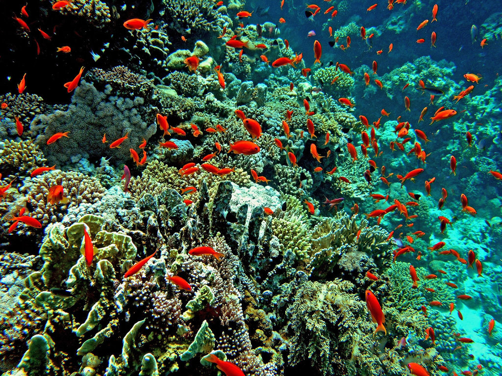 Красное море картинки доклад для класса