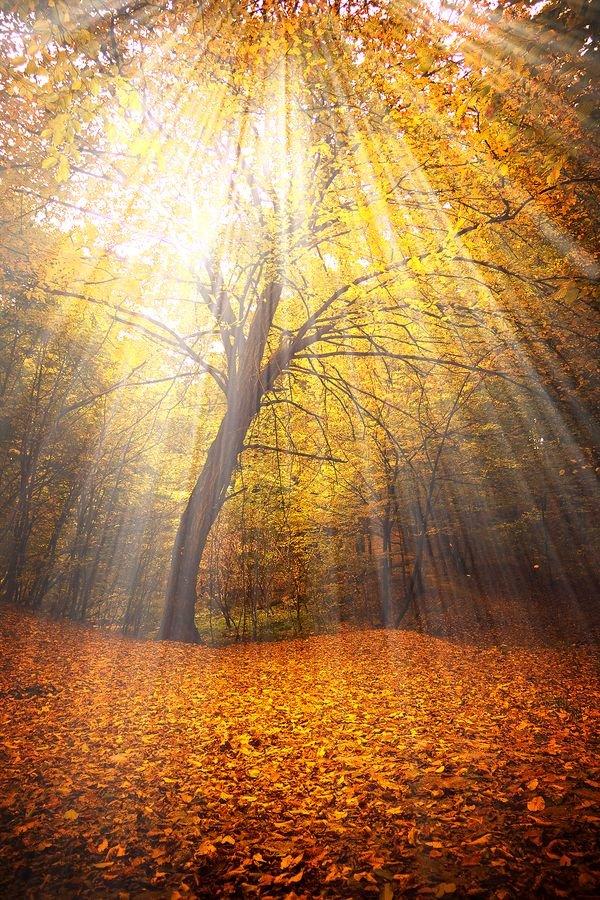 Открытки, открытки осень солнце
