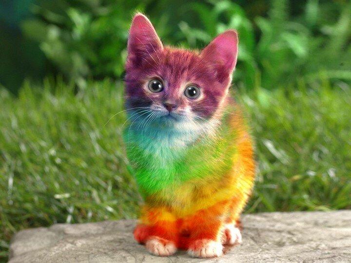 ротовой картинки с разноцветными животными время