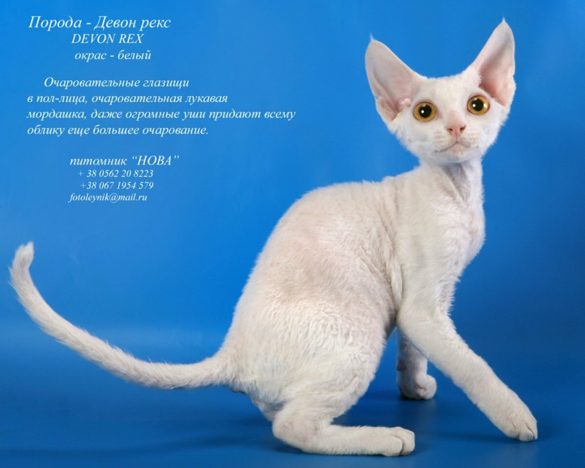 наверняка, разновидности кошек с картинками нас тоже зацвели