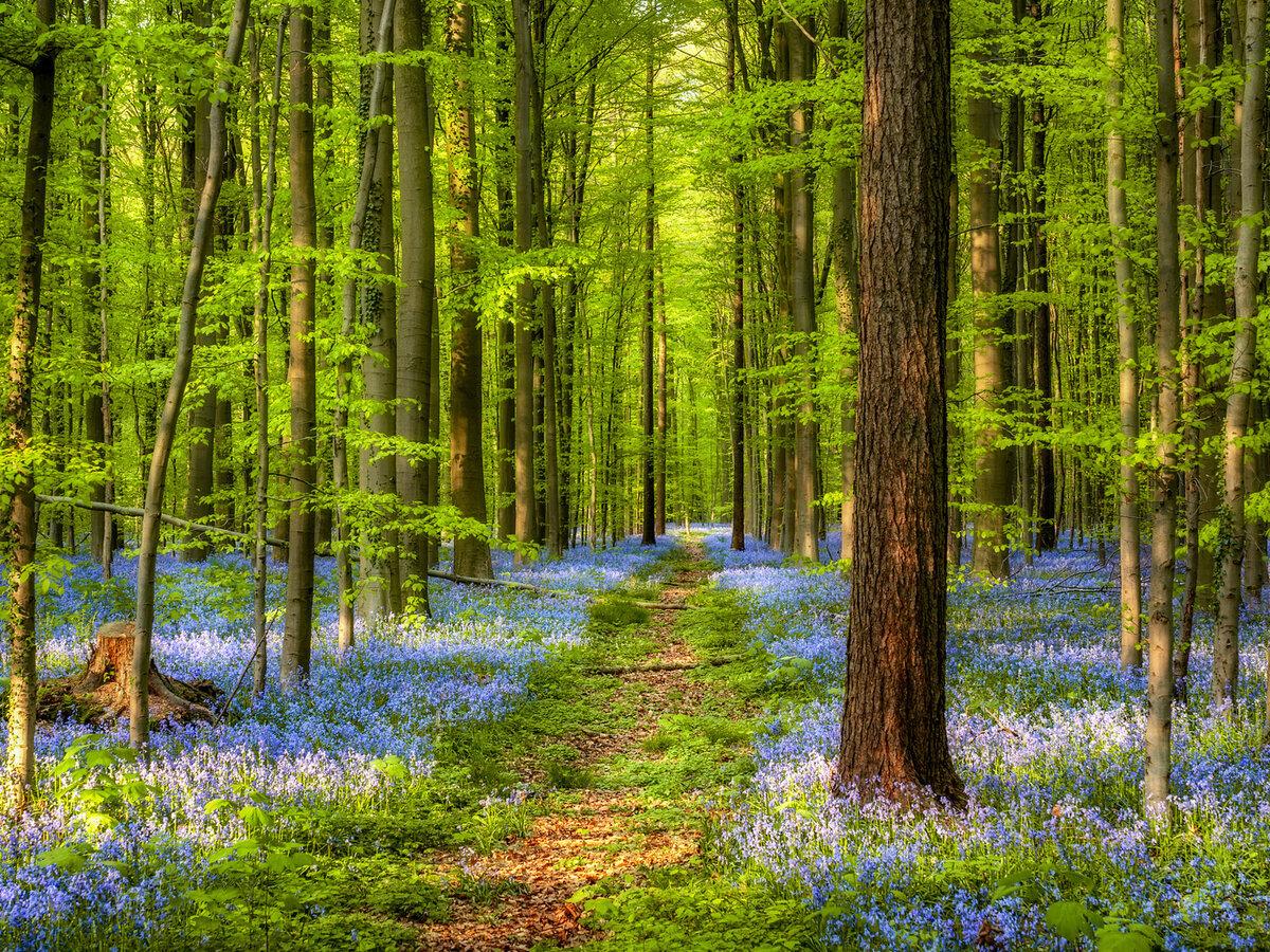 девушек, красивые картинки весенние лес можно найти однотаповые
