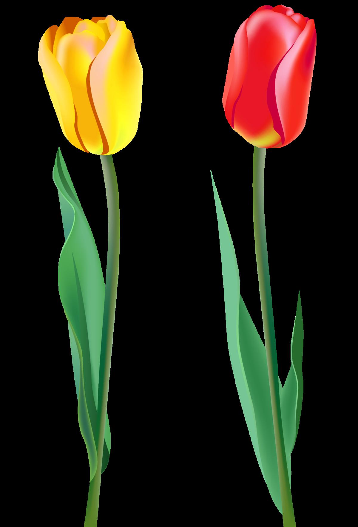 Картинка тюльпаны на прозрачном фоне, анимешные смешные открытка