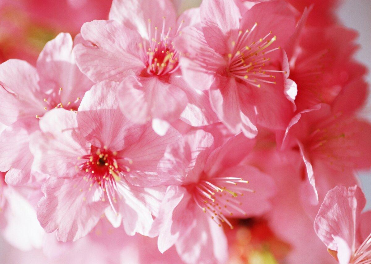 Мультяшек диснея, картинки розового цвета красивые