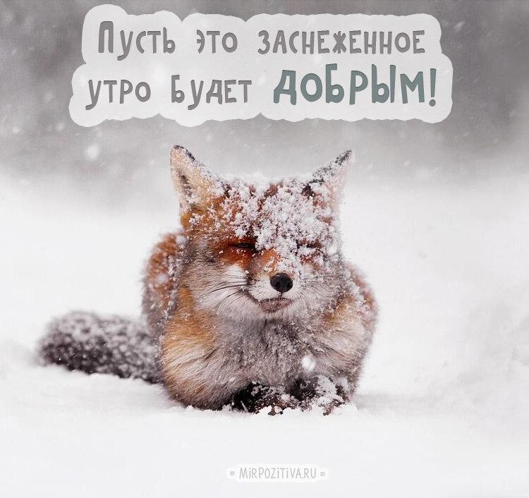 Утро зима картинки с надписями