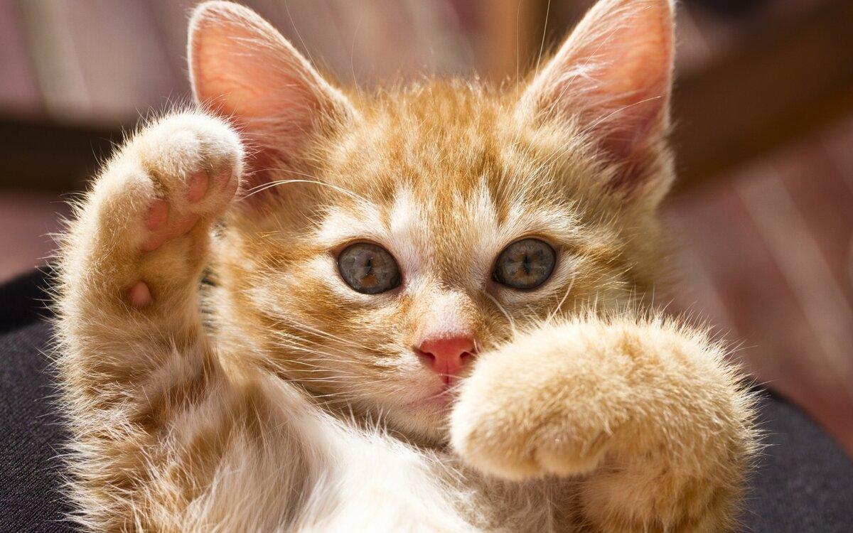 Открытка для, смешные картинки на телефон животные
