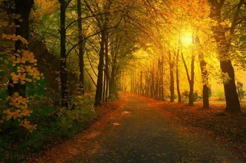 волшебный осенний пейзаж в парке