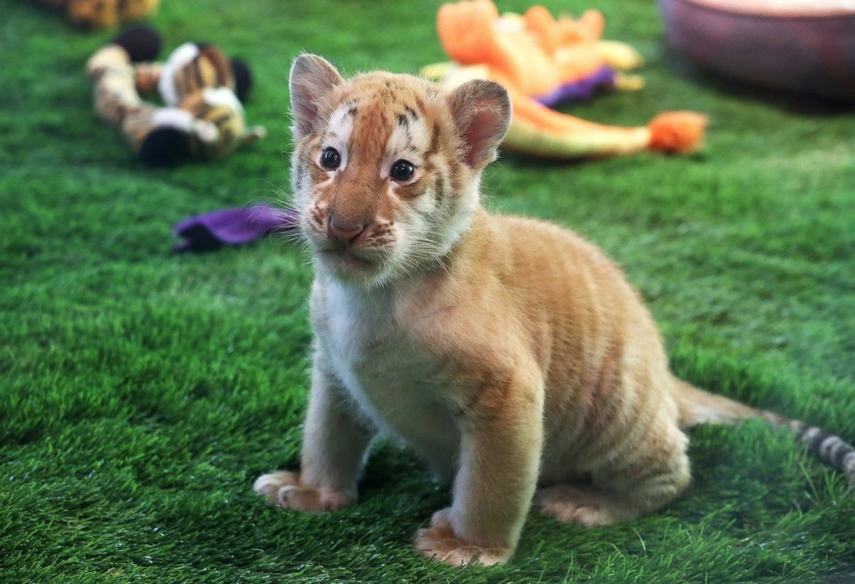 Картинки с самыми милыми животными в мире говоря