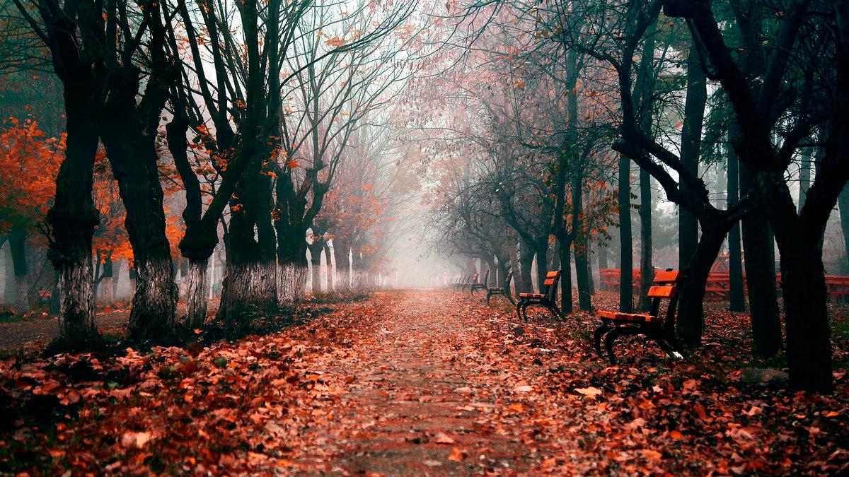 Осенняя аллея перед зимой
