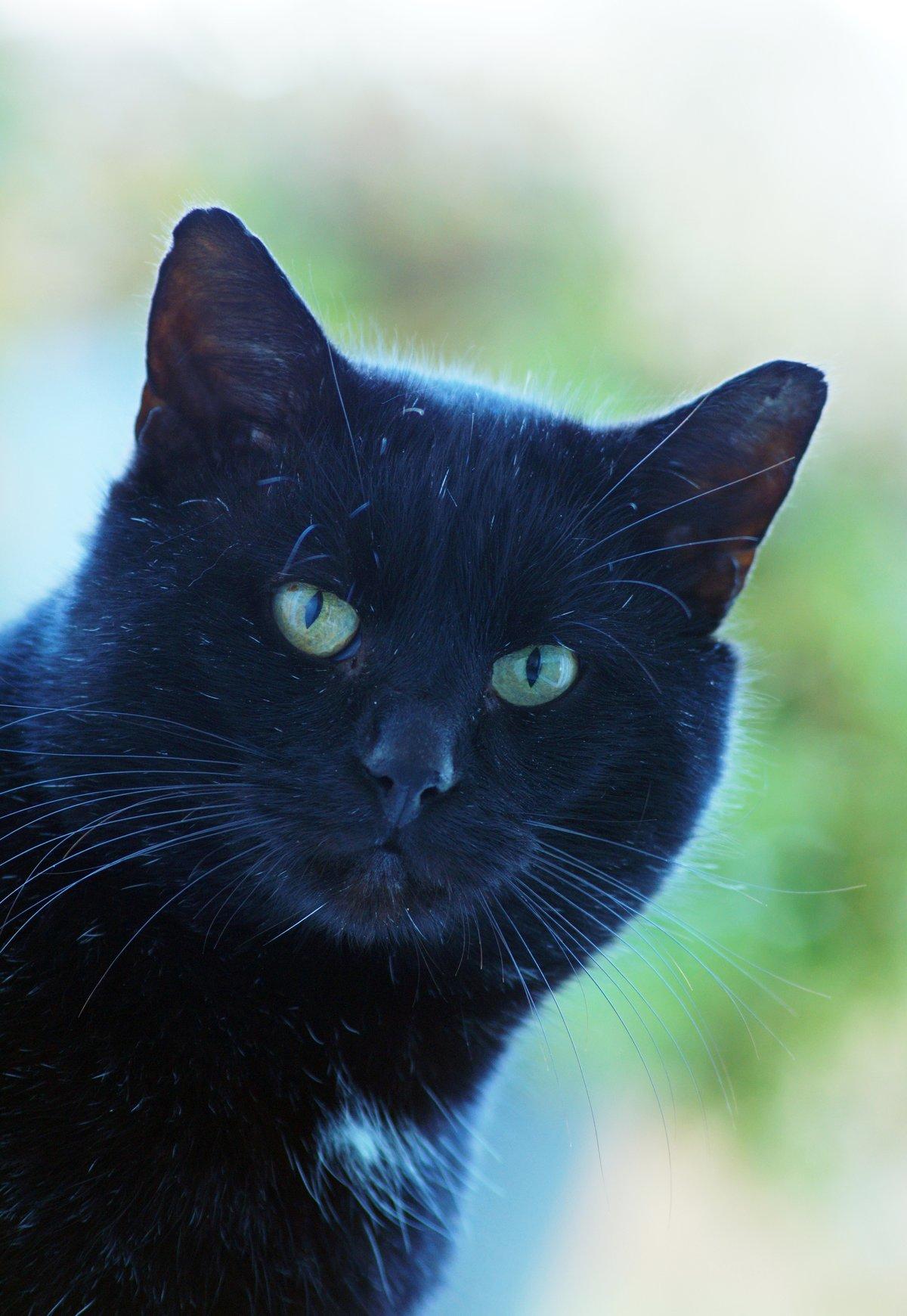 картинки с черной кошечкой росинбанк универсальный