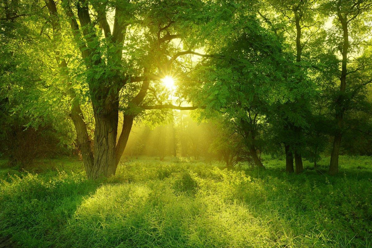 Годовщиной свадьбы, лето фото красивые природа лес